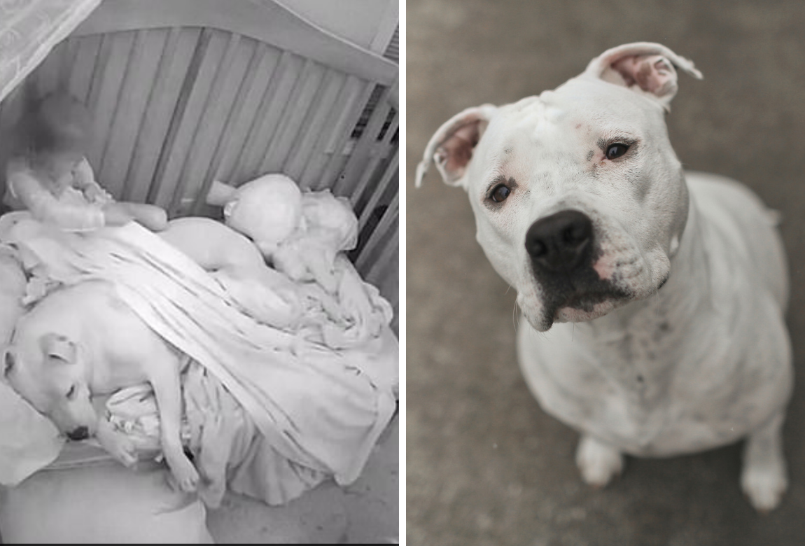 1082fa3458ff The adorable moment a baby 'tucks in' the family dog | Practical ...