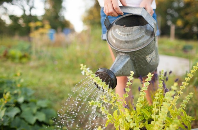 Gardens can only be watered before 10am or after 4pm with a watering can or bucket.